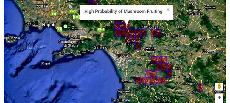 MUSHRING, an intelligent tool for forecasting wild mushrooms fruiting