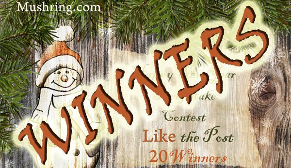 """""""Happy New Year"""" Sweepstake Contest – Winners List"""