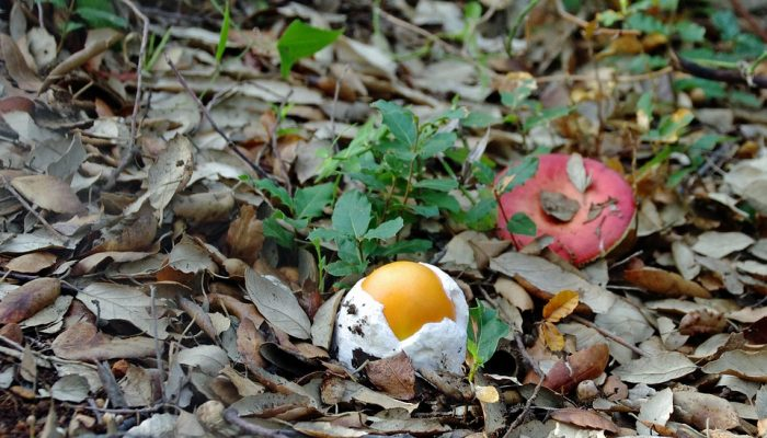 Mushrooms in deciduous forests