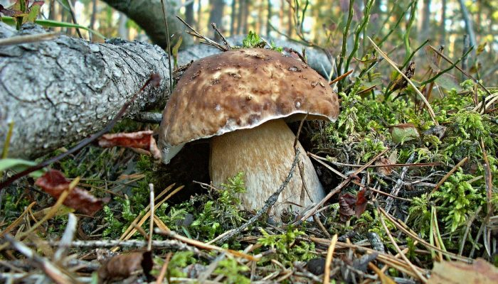 Chemical tests for wild mushrooms identification